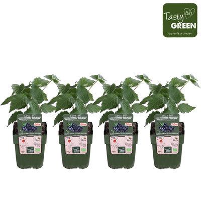 Lowberries® (RULIBLPR13BIO)