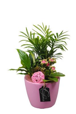 Arrangement Basic creatie in keramiek roze(BACR-1910RZ)